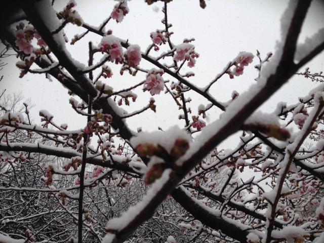 2週続けての大雪